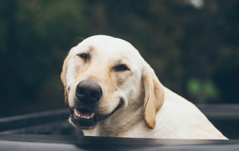 dog-smiling-enjoying-life
